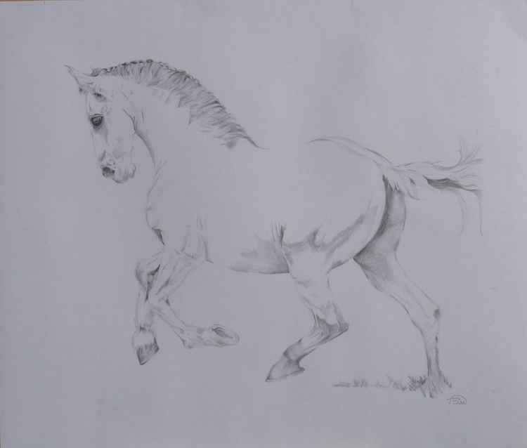 Prancer in graphite