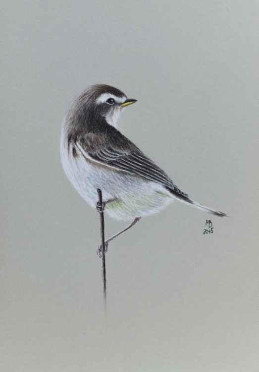 """Original pastel drawing """"Garden warbler"""""""