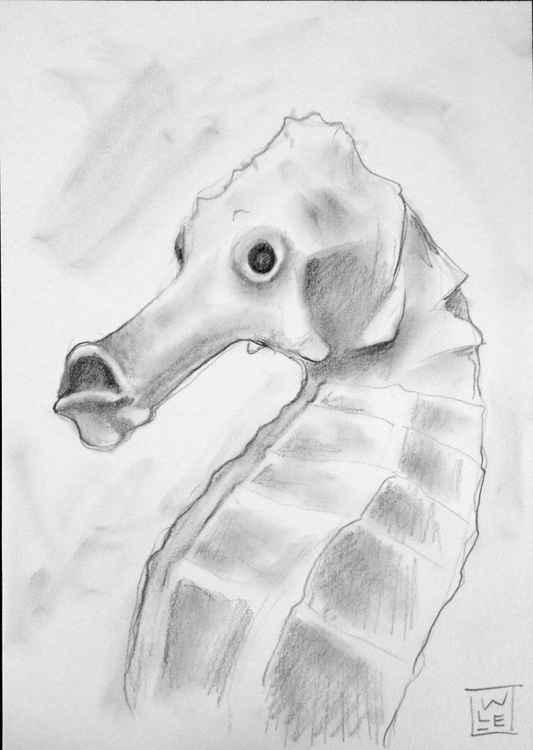 Seahorse -
