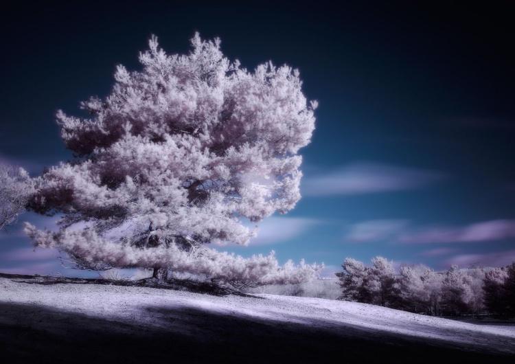 Lone Pine - Image 0
