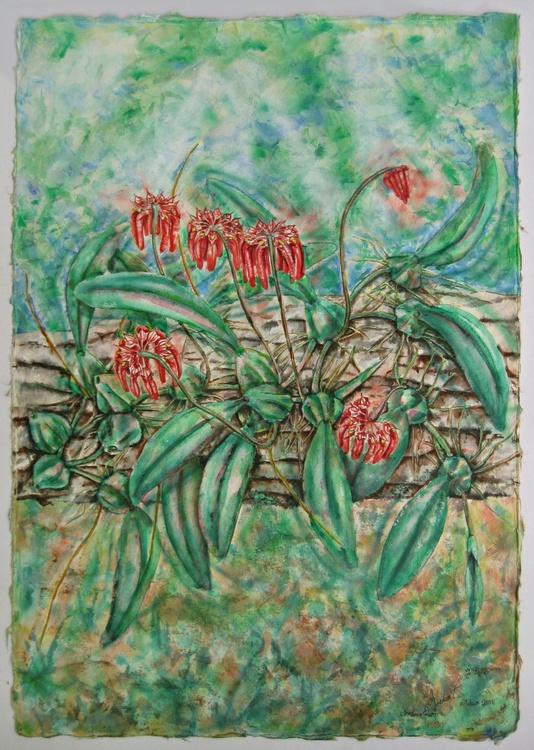 Cirrhopetalum, colour, Wild Orchids of Asia - Image 0