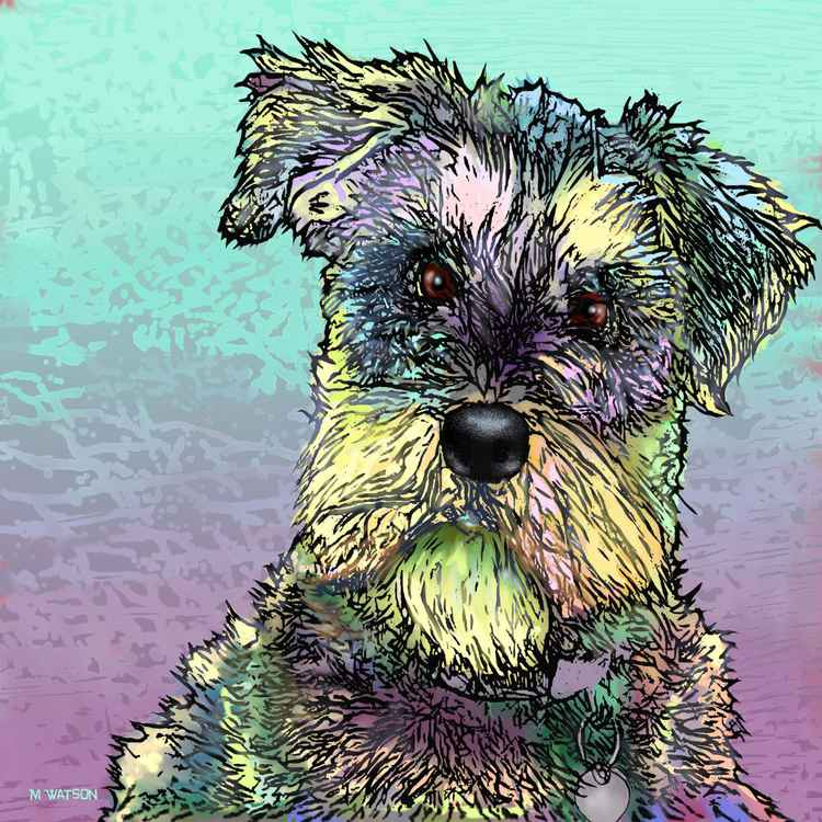 Schnauzer Dog -