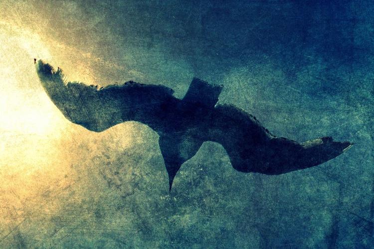 Towards the Sun - Canvas 75 x 50 cm - Image 0