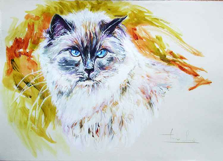 Exotic - Portrait of a Cat -