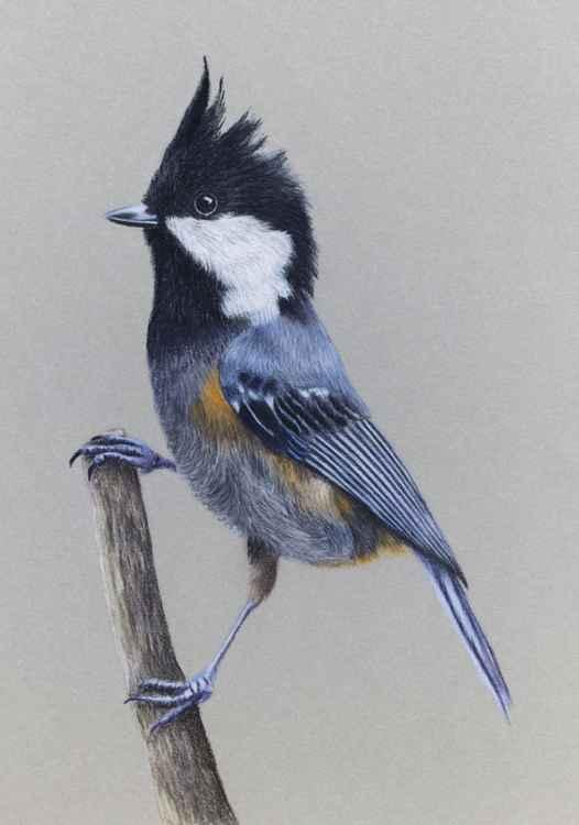 "Original pastel drawing ""Spot-winged Tit"" -"