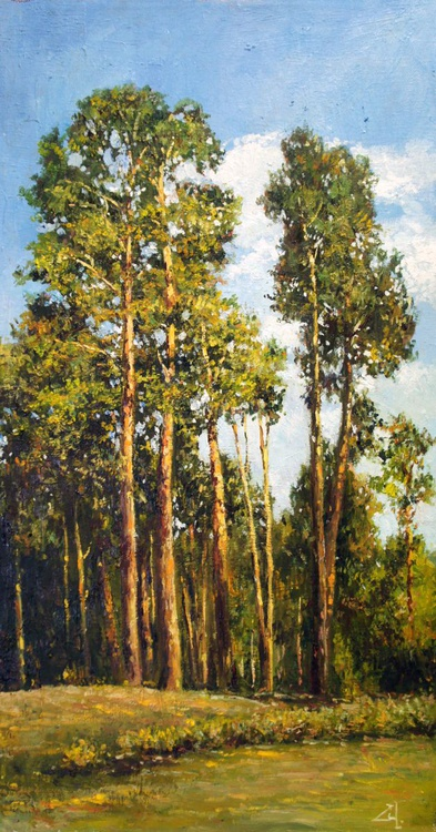 Tall Pines in Summer - Image 0