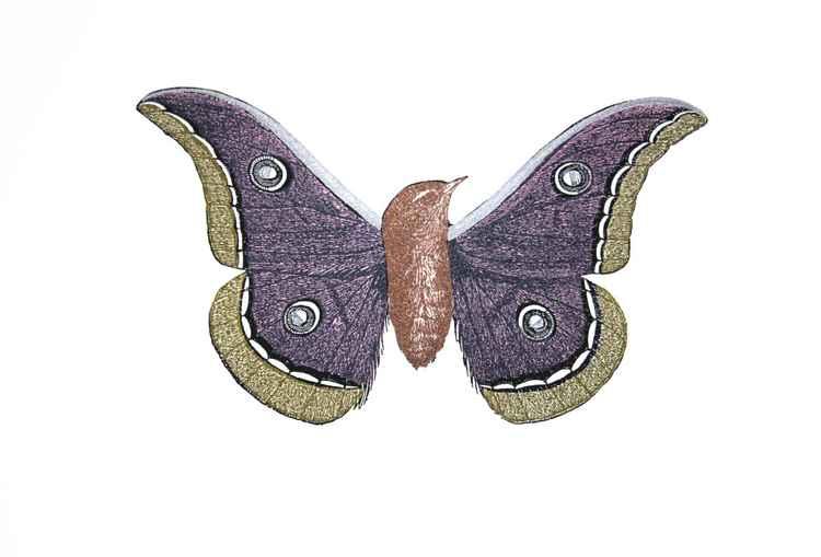 Moth-bird #1 -