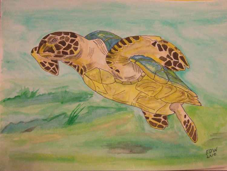 Sea Turtle II -
