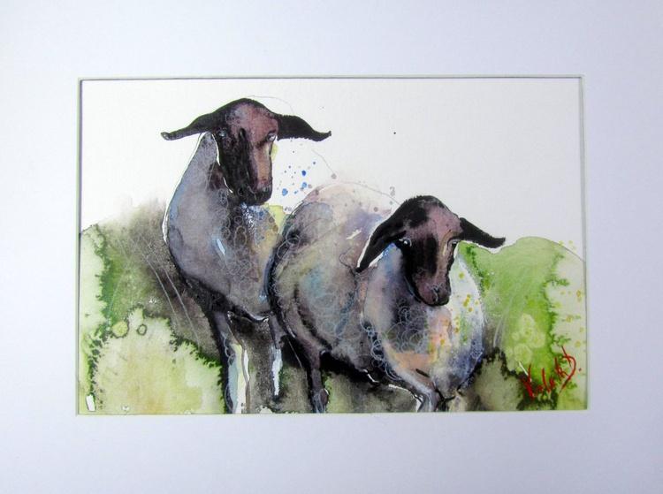 Domestic Sheep - Image 0