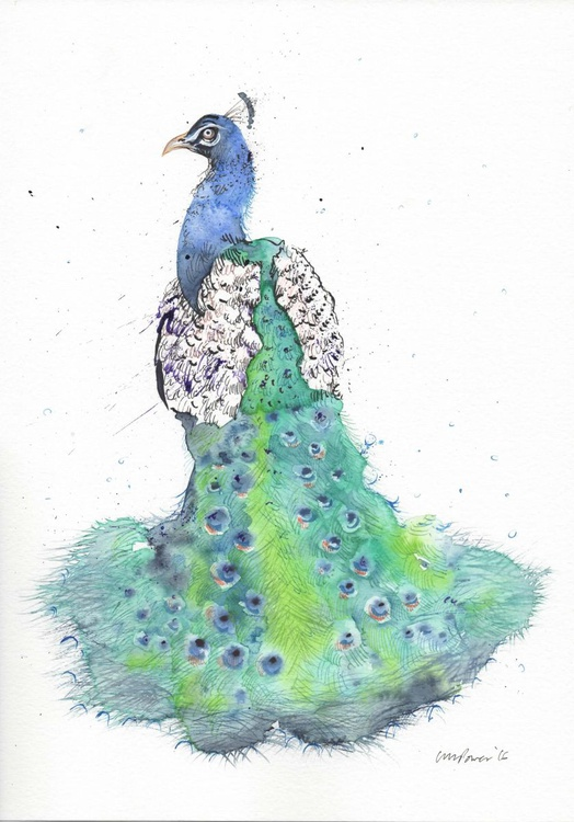 Peacock train - Daily Bird #60 - Image 0