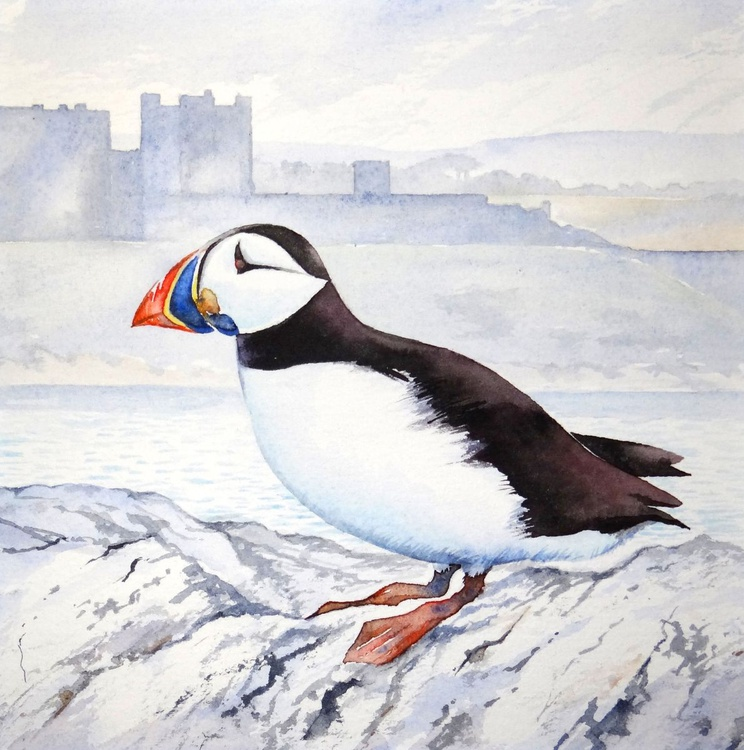 The Puffin of Inner Farne - Image 0