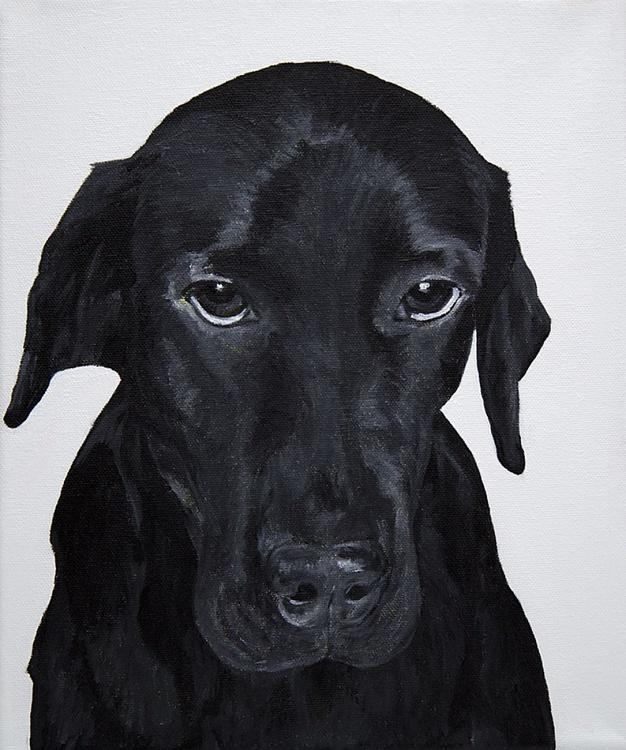 Black Labrador - Image 0