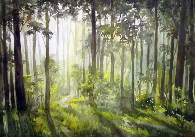 Early Morning light in Forest-Watercolor on Paper