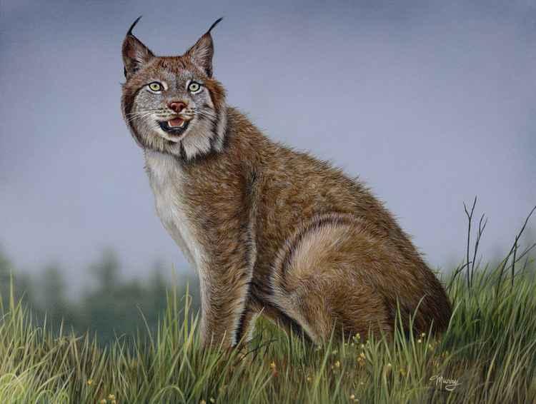 Windy Lynx