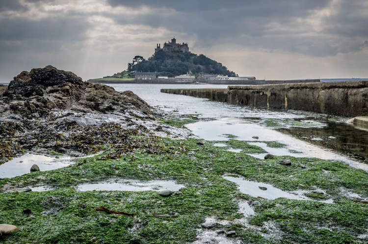 St Michaels mount over the weed - Image 0