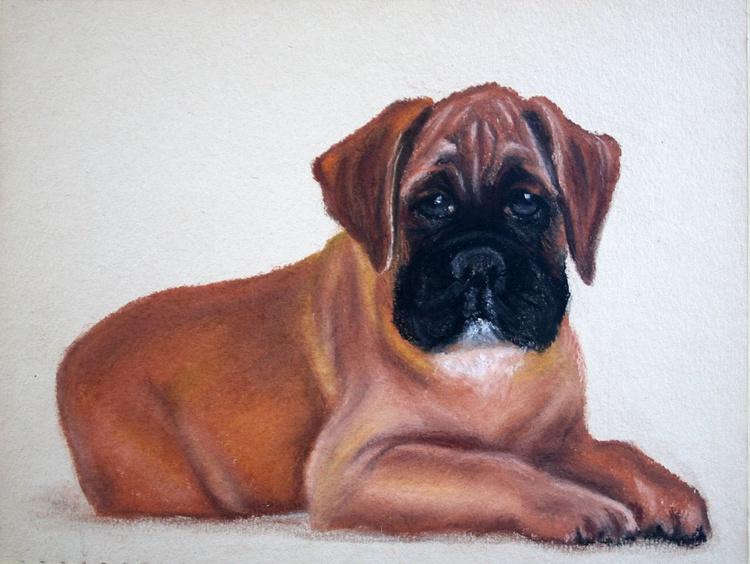 Boxer puppy - Image 0