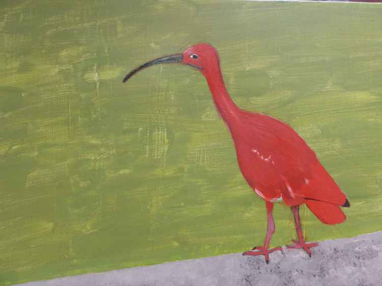 Ibis -