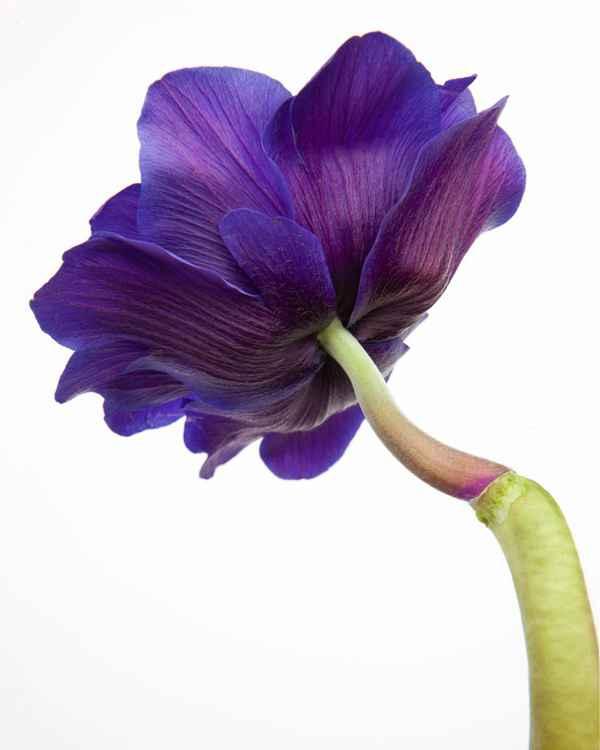 Botanical 7 -