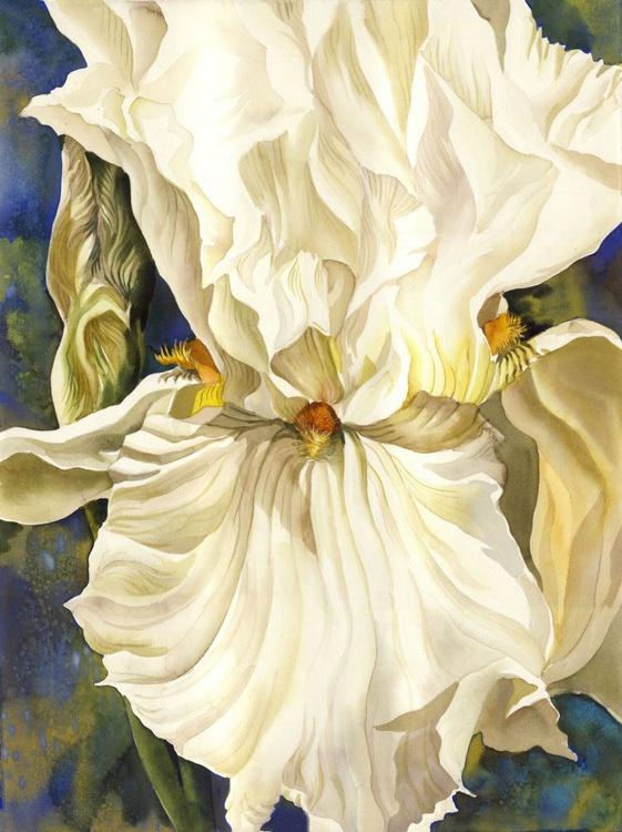 White Iris with Blue - Image 0