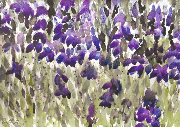 'Iris Bed'