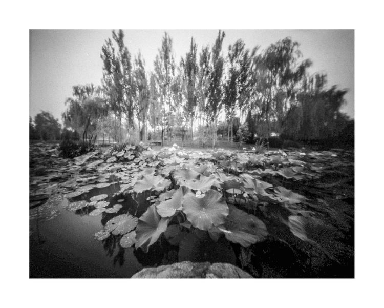 Lotus-3 - Image 0