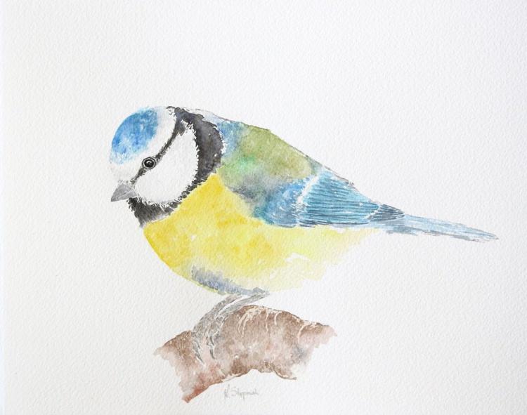 Blue tit - Image 0
