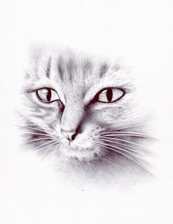 Cat 1 , study - Image 0