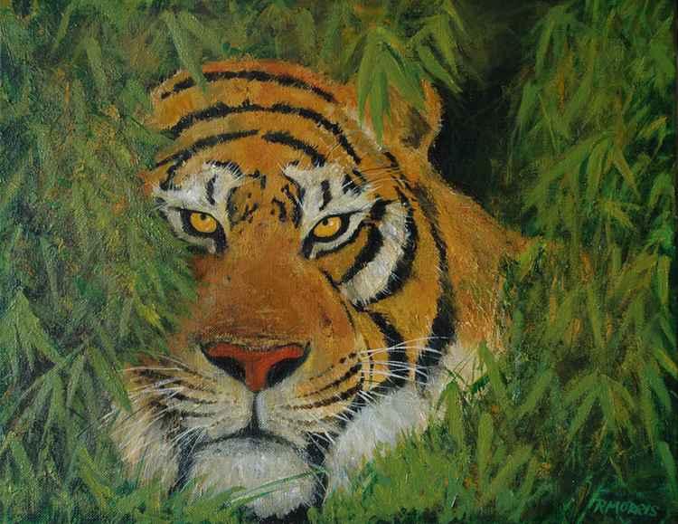 Tiger's eye -