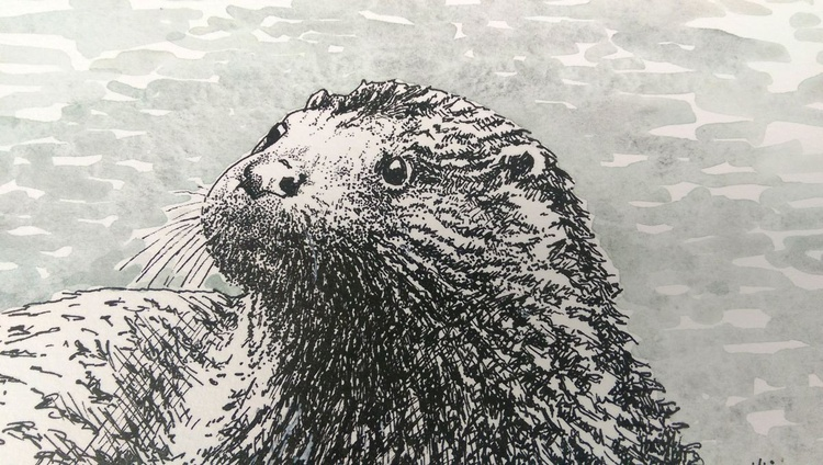 Curious  otter - Image 0