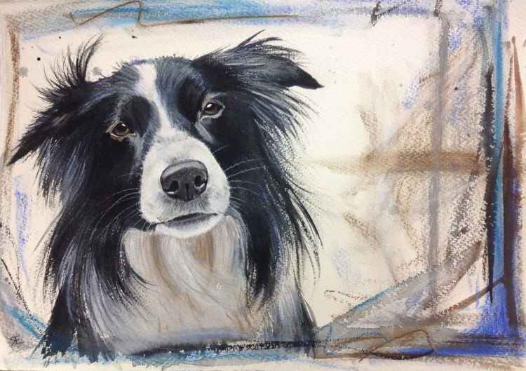 'Betsy' collie dog