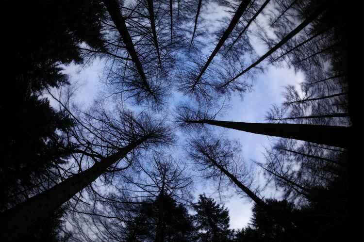 'BARE WINTER TREES #1'