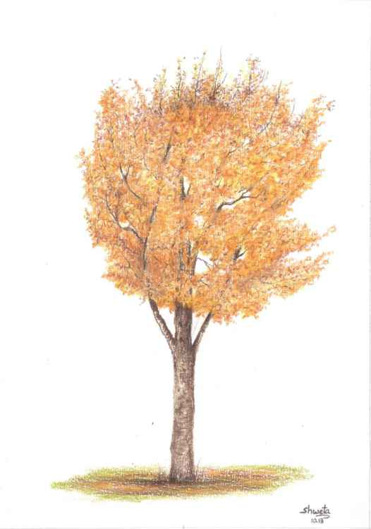 Golden Trumpet Tree Drawing -