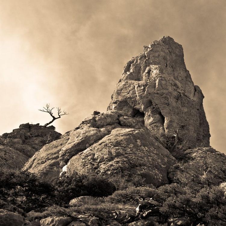 Rock & Tree - Image 0