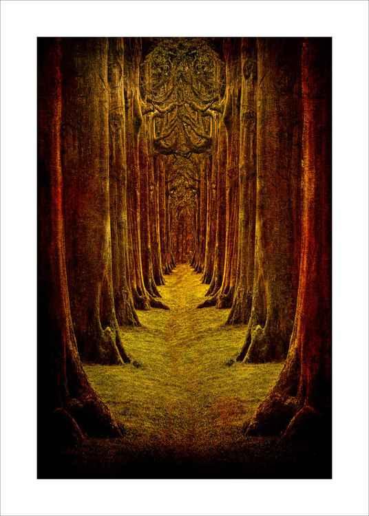 Duplicate trees -