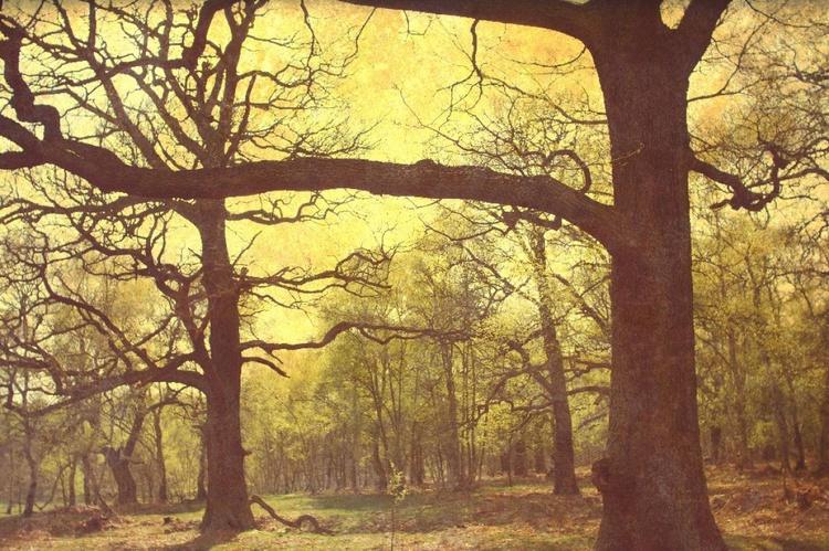 Peering Into Sherwood Forest - Image 0