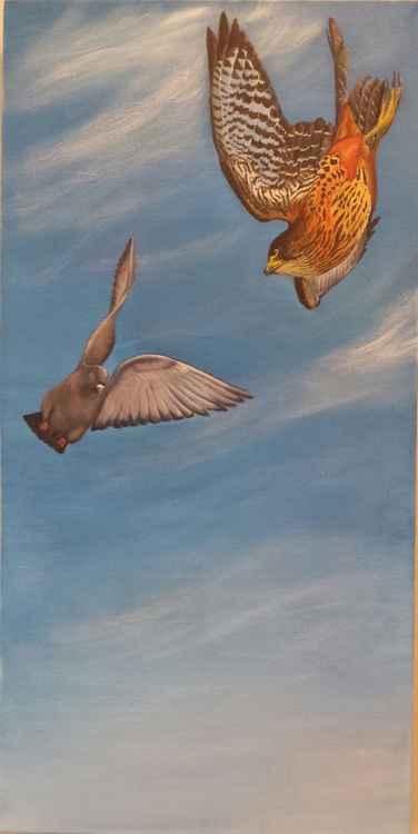 Falcon Vs Pigeon