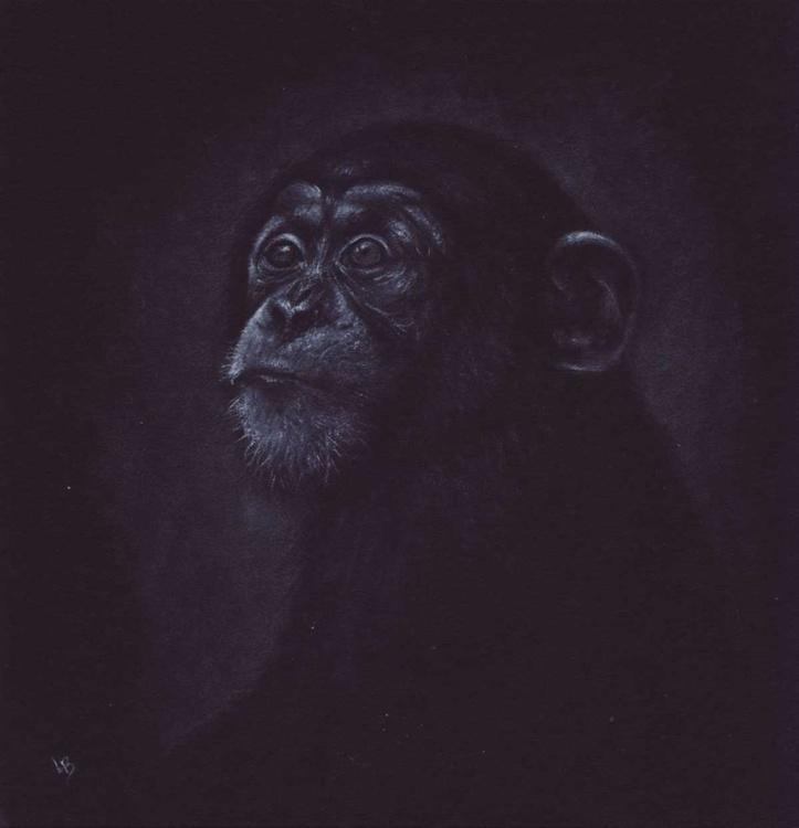 Young Chimp - Image 0