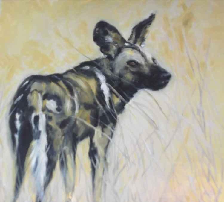 Wild Dog in Africa