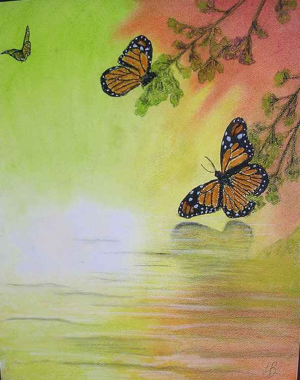Monarch Butterflies -
