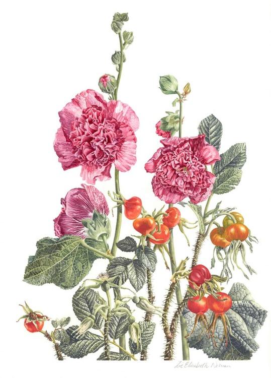 Hollyhocks and Rosa Rugosa - Image 0