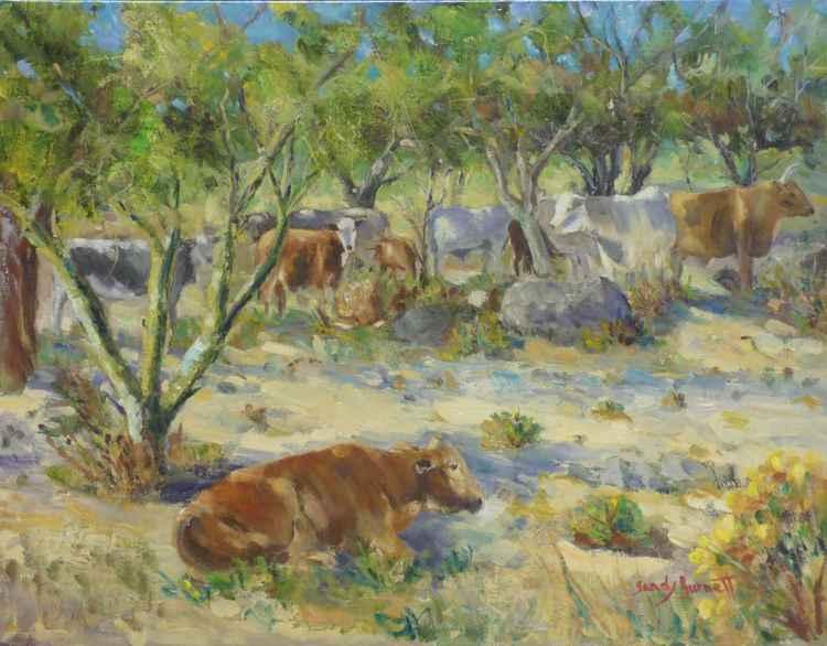 Desert cattle -