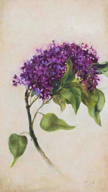 The Lilac - Image 0