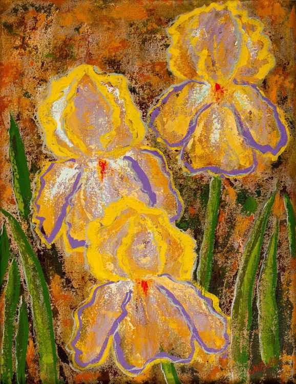 Fleurs des Iris -