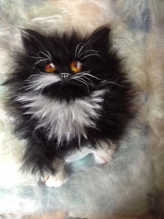 Cat - Image 0