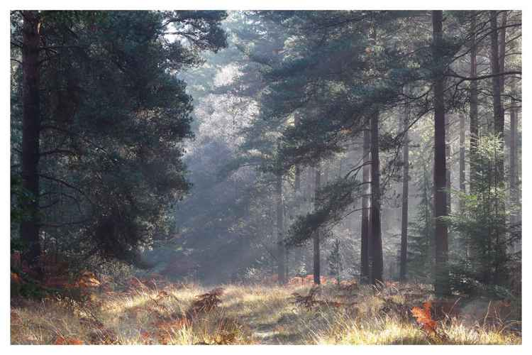 Forest Light -