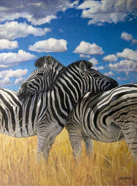 Zebras -