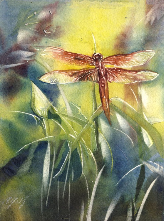 red dragonfly - Image 0