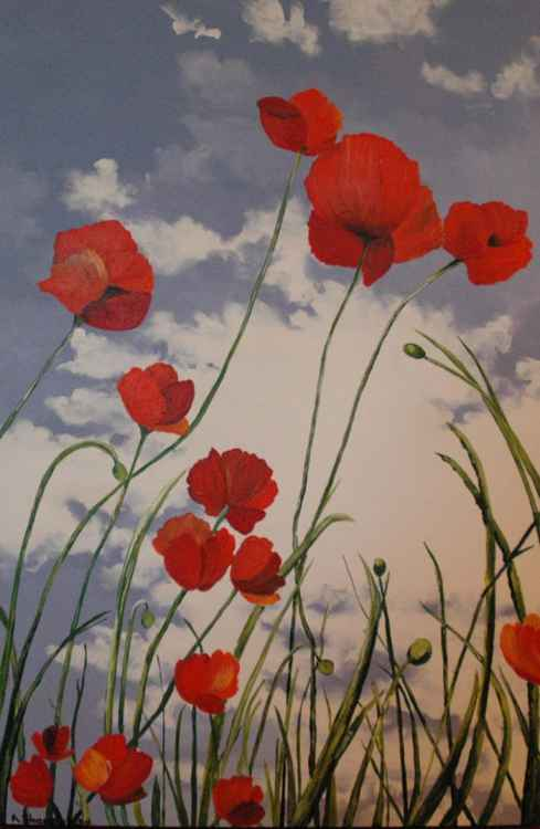 Large Red Poppies