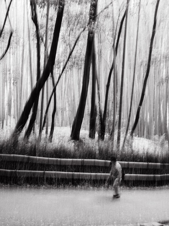 Bamboo Forest, from the Japan Notebook. - Image 0