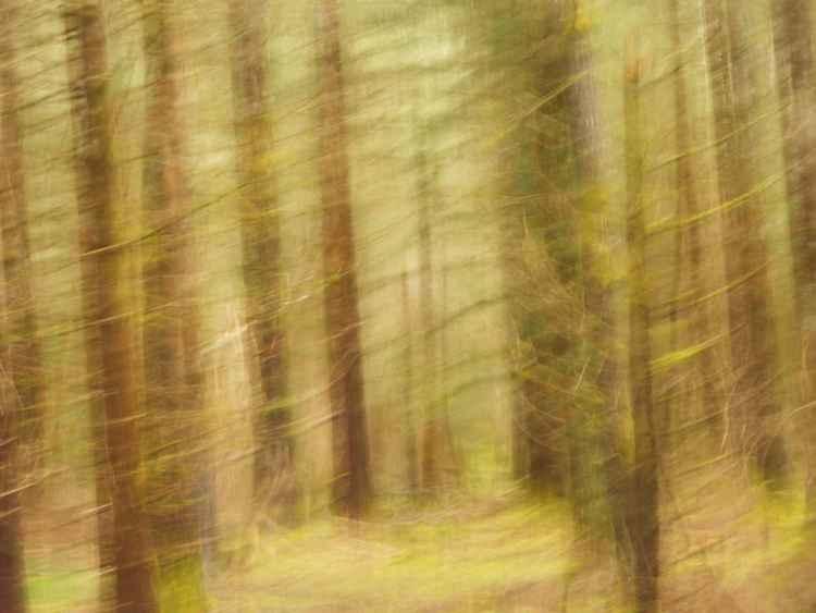 Au fond des bois....
